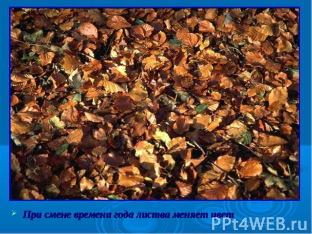При смене времени года листва меняет цвет