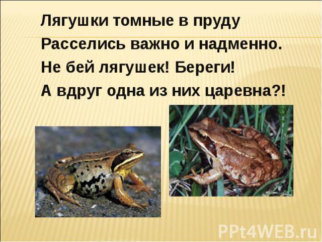 Лягушки томные в пруду Расселись важно и надменно. Не бей лягушек! Береги!А вдруг одна из них царевна?!