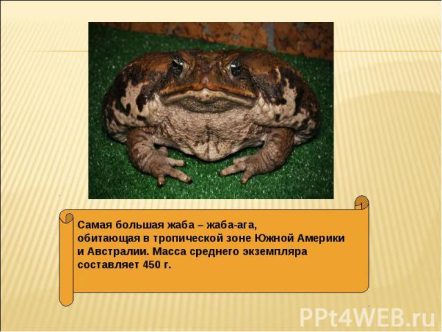 Самая большая жаба – жаба-ага, обитающая в тропической зоне Южной Америки и Австралии. Масса среднего экземпляра составляет 450 г.