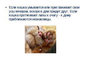 Если кошка умывается или приглаживает свои усы вечером, вскоре в дом придет друг