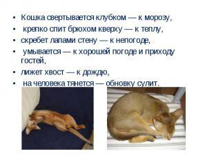Кошка свертывается клубком — к морозу, крепко спит брюхом кверху — к теплу, скре