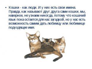Кошки - как люди. И у них есть свои имена. Правда, как называют друг друга сами