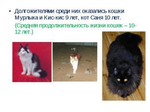 Долгожителями среди них оказались кошки Мурлыка и Кис-кис 9 лет, кот Саня 10 лет