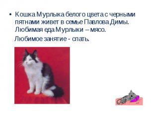 Кошка Мурлыка белого цвета с черными пятнами живет в семье Павлова Димы. Любимая