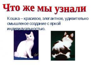 Что же мы узнали Кошка – красивое, элегантное, удивительно смышленое создание с