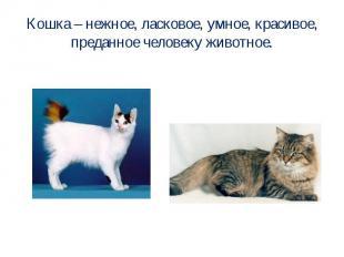 Кошка – нежное, ласковое, умное, красивое, преданное человеку животное.