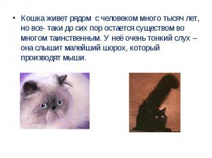 Кошка живет рядом с человеком много тысяч лет, но все- таки до сих пор остается