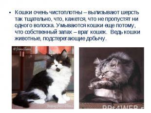 Кошки очень чистоплотны – вылизывают шерсть так тщательно, что, кажется, что не