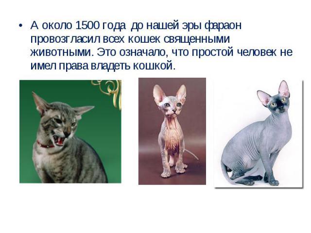 А около 1500 года до нашей эры фараон провозгласил всех кошек священными животными. Это означало, что простой человек не имел права владеть кошкой.