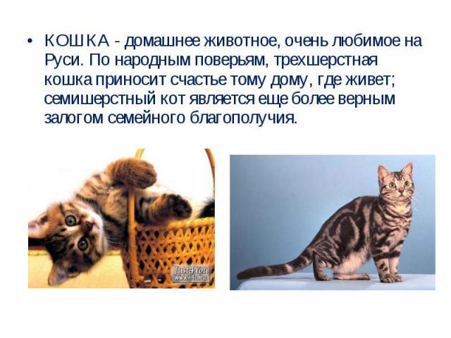 КОШКА - домашнее животное, очень любимое на Руси. По народным поверьям, трехшерстная кошка приносит счастье тому дому, где живет; семишерстный кот является еще более верным залогом семейного благополучия.