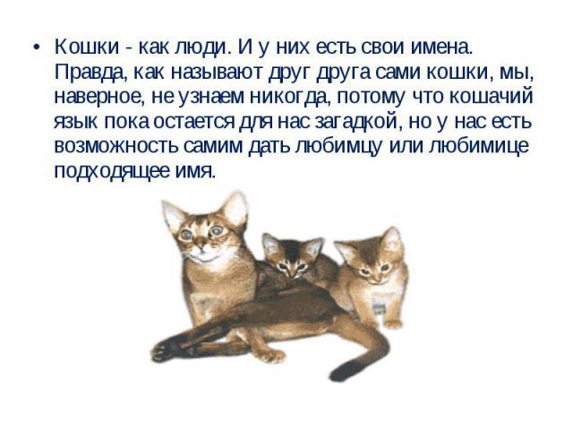 Кошки - как люди. И у них есть свои имена. Правда, как называют друг друга сами кошки, мы, наверное, не узнаем никогда, потому что кошачий язык пока остается для нас загадкой, но у нас есть возможность самим дать любимцу или любимице подходящее имя.
