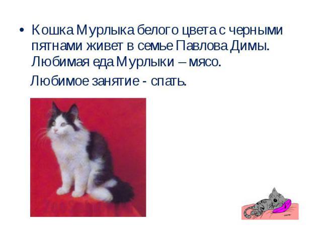 Кошка Мурлыка белого цвета с черными пятнами живет в семье Павлова Димы. Любимая еда Мурлыки – мясо. Любимое занятие - спать.