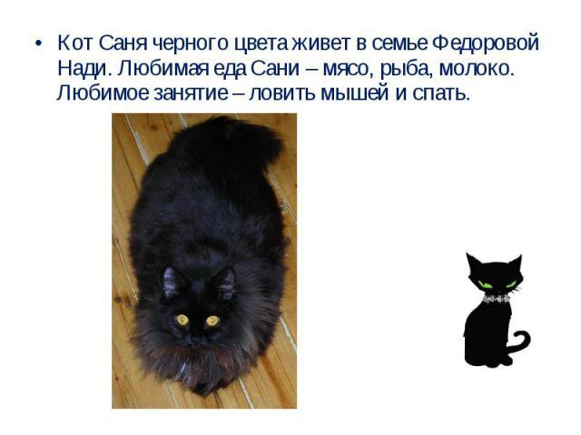 Кот Саня черного цвета живет в семье Федоровой Нади. Любимая еда Сани – мясо, рыба, молоко. Любимое занятие – ловить мышей и спать.