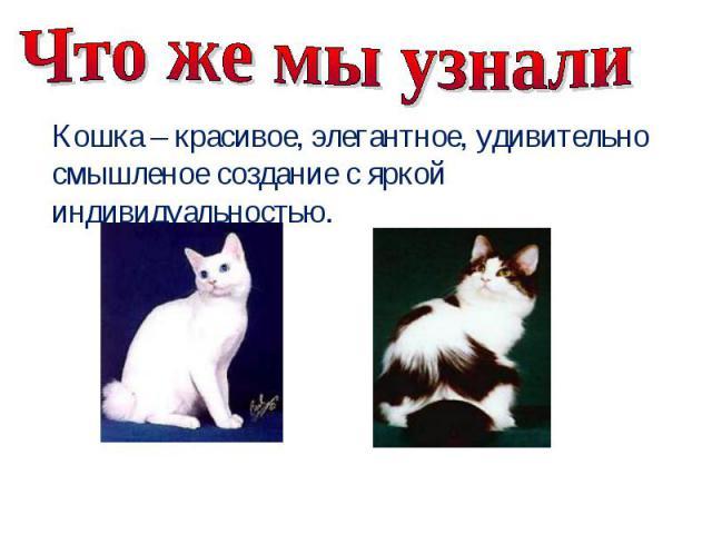 Что же мы узнали Кошка – красивое, элегантное, удивительно смышленое создание с яркой индивидуальностью.