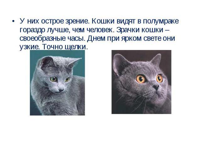 У них острое зрение. Кошки видят в полумраке гораздо лучше, чем человек. Зрачки кошки – своеобразные часы. Днем при ярком свете они узкие. Точно щелки.
