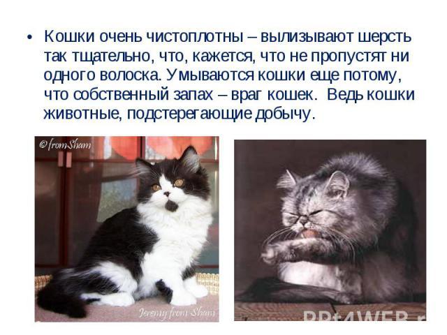 Кошки очень чистоплотны – вылизывают шерсть так тщательно, что, кажется, что не пропустят ни одного волоска. Умываются кошки еще потому, что собственный запах – враг кошек. Ведь кошки животные, подстерегающие добычу.