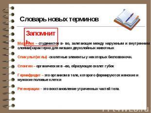 Словарь новых терминов Мезоглея – студенистое в- во, залегающее между наружным и