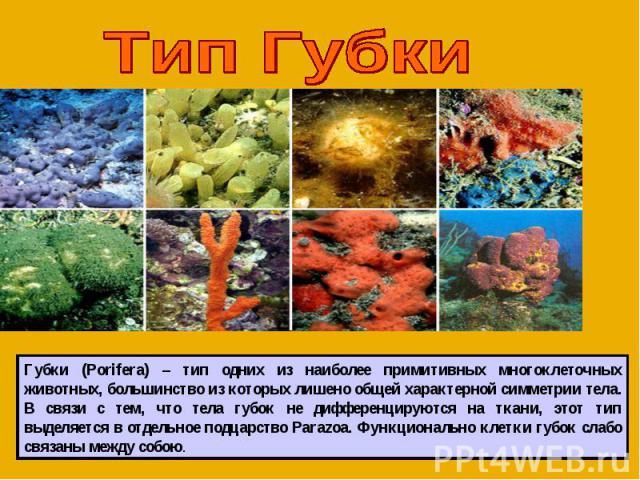 Тип Губки Губки (Porifera) – тип одних из наиболее примитивных многоклеточных животных, большинство из которых лишено общей характерной симметрии тела. В связи с тем, что тела губок не дифференцируются на ткани, этот тип выделяется в отдельное подца…