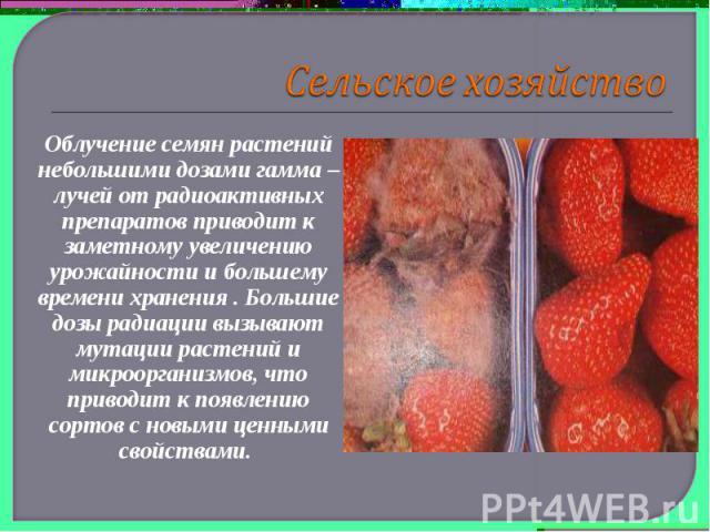Сельское хозяйствоОблучение семян растений небольшими дозами гамма – лучей от радиоактивных препаратов приводит к заметному увеличению урожайности и большему времени хранения . Большие дозы радиации вызывают мутации растений и микроорганизмов, что п…