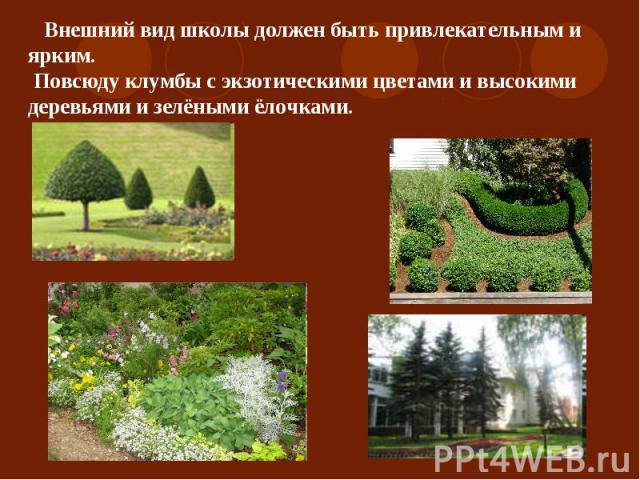 Внешний вид школы должен быть привлекательным и ярким. Повсюду клумбы с экзотическими цветами и высокими деревьями и зелёными ёлочками.