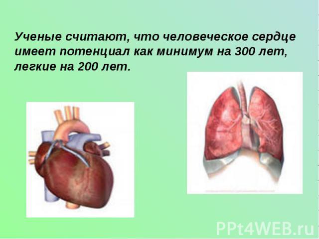 Ученые считают, что человеческое сердце имеет потенциал как минимум на 300 лет, легкие на 200 лет.