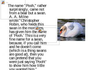 """The name """"Pooh,"""" rather surprisingly, came not from a bear but a swan. A. A. Mil"""