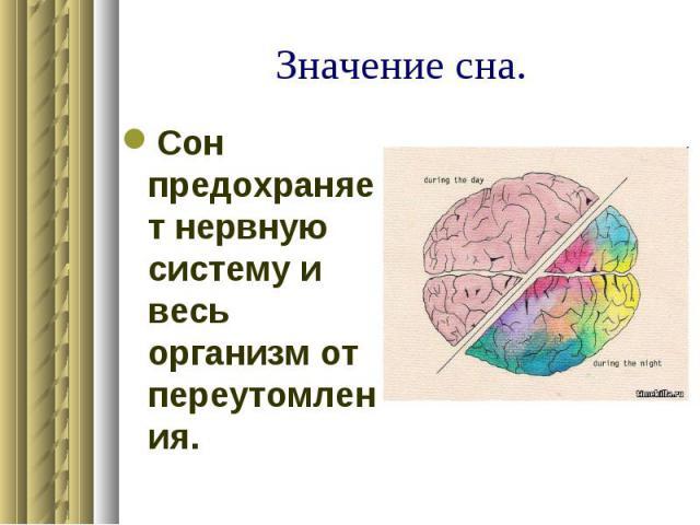 Значение сна. Сон предохраняет нервную систему и весь организм от переутомления.