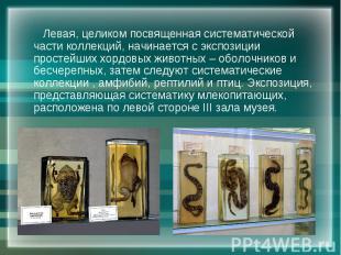 Левая, целиком посвященная систематической части коллекций, начинается с экспози
