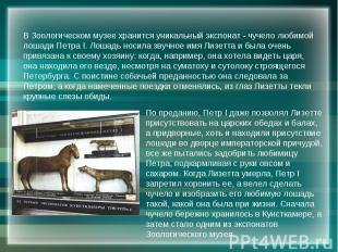 В Зоологическом музее хранится уникальный экспонат - чучело любимой лошади Петра