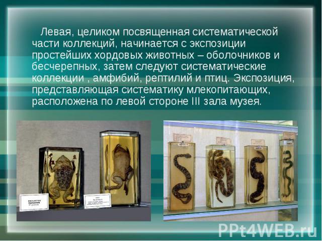 Левая, целиком посвященная систематической части коллекций, начинается с экспозиции простейших хордовых животных – оболочников и бесчерепных, затем следуют систематические коллекции , амфибий, рептилий и птиц. Экспозиция, представляющая систематику …
