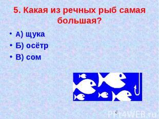 5. Какая из речных рыб самая большая?А) щукаБ) осётрВ) сом