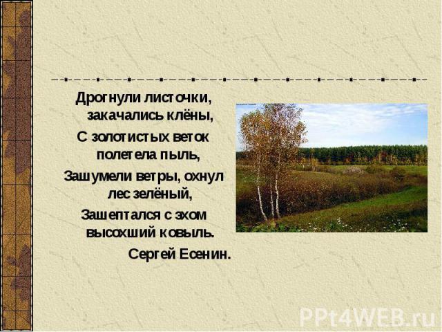 Дрогнули листочки, закачались клёны, С золотистых веток полетела пыль, Зашумели ветры, охнул лес зелёный, Зашептался с эхом высохший ковыль. Сергей Есенин.