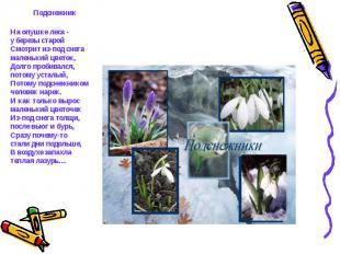 ПодснежникНа опушке леса - у березы старойСмотрит из-под снега маленький цветок,