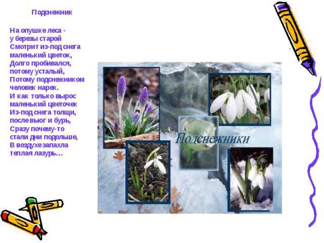 ПодснежникНа опушке леса - у березы старойСмотрит из-под снега маленький цветок,Долго пробивался,потому усталый,Потому подснежником человек нарек.И как только вырос маленький цветочекИз-под снега толщи, после вьюг и бурь,Сразу почему-то стали дни по…