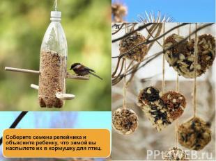 Соберите семена репейника и объясните ребенку, что зимой вы наспылете их в корму