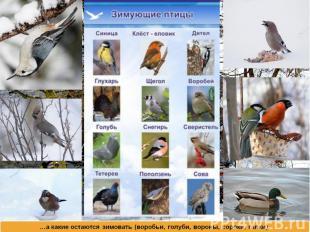 …а какие остаются зимовать (воробьи, голуби, вороны, сороки, галки).