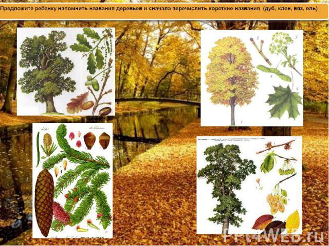 Предложите ребенку напомнить названия деревьев и сначала перечислить короткие названия (дуб, клен, вяз, ель)