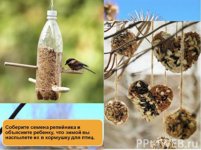 Соберите семена репейника и объясните ребенку, что зимой вы наспылете их в кормушку для птиц.