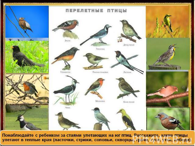 Понаблюдайте с ребенком за стаями улетающих на юг птиц. Расскажите, какие птицы улетают в теплые края (ласточки, стрижи, соловьи, скворцы, грачи, гуси, утки, лебеди).