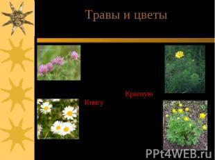 Травы и цветыВ лесах богато представлено разнотравье. Сохранилось много растений