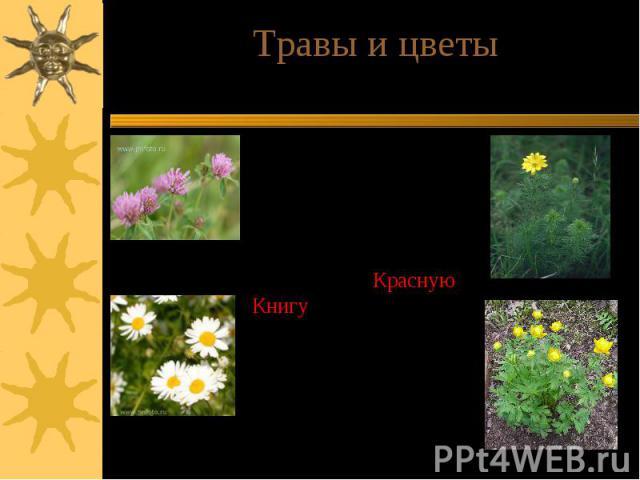 Травы и цветыВ лесах богато представлено разнотравье. Сохранилось много растений, занесенных в Красную Книгу, например, адонис, рябчик, сон-трава, купальница. Растет много лекарственных трав.В лугах растут высокие травы с яркими цветами.