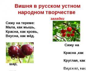 Вишня в русском устном народном творчестве загадкиСижу на тереме:Мала, как мышь,