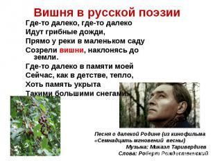 Вишня в русской поэзииГде-то далеко, где-то далекоИдут грибные дожди,Прямо у рек