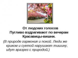 От людских голосовПугливо вздрагивают по вечерамКрасавицы-вишни.(В природе гармо