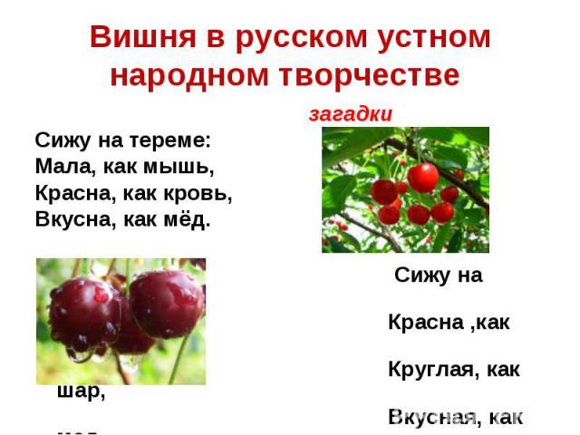 Вишня в русском устном народном творчестве загадкиСижу на тереме:Мала, как мышь,Красна, как кровь,Вкусна, как мёд. Сижу на дереве: Красна ,как кровь, Круглая, как шар, Вкусная, как мед.