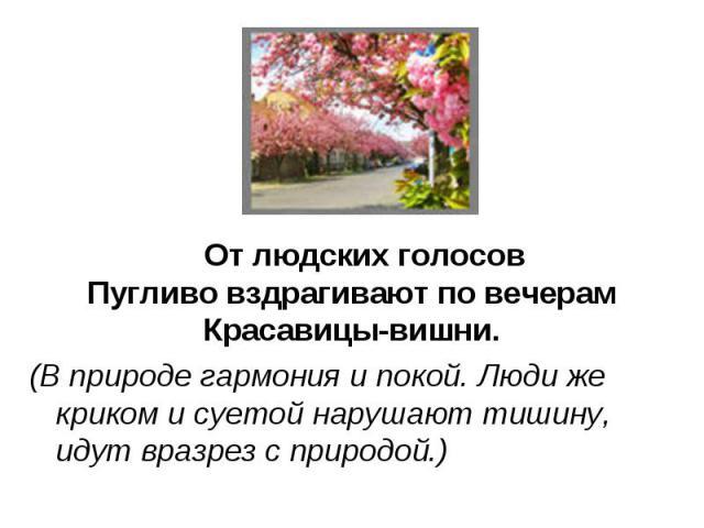 От людских голосовПугливо вздрагивают по вечерамКрасавицы-вишни.(В природе гармония и покой. Люди же криком и суетой нарушают тишину, идут вразрез с природой.)