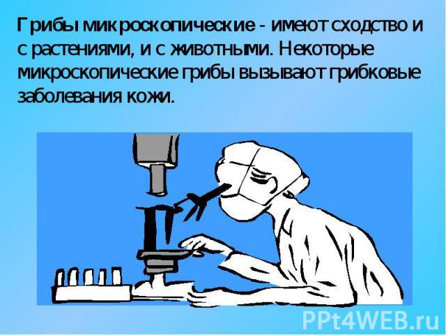 Грибы микроскопические - имеют сходство и с растениями, и с животными. Некоторые микроскопические грибы вызывают грибковые заболевания кожи.