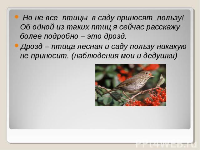 Но не все птицы в саду приносят пользу! Об одной из таких птиц я сейчас расскажу более подробно – это дрозд. Дрозд – птица лесная и саду пользу никакую не приносит. (наблюдения мои и дедушки)