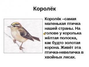 Королёк Королёк –самая маленькая птичка нашей страны. На голове у королька жёлта
