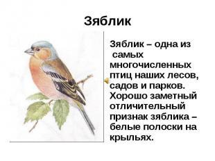 Зяблик Зяблик – одна из самых многочисленных птиц наших лесов, садов и парков. Х